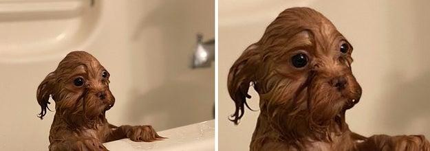 A wet puppy in a bathtub