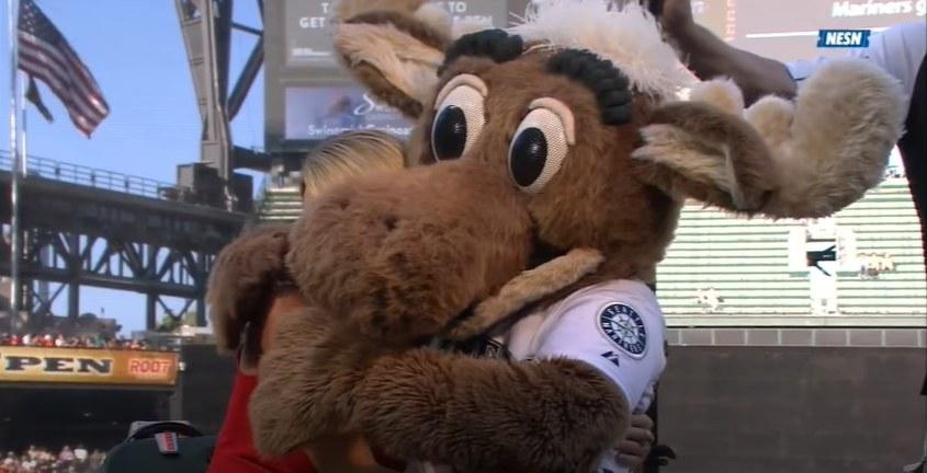 Moose hugging reporter.