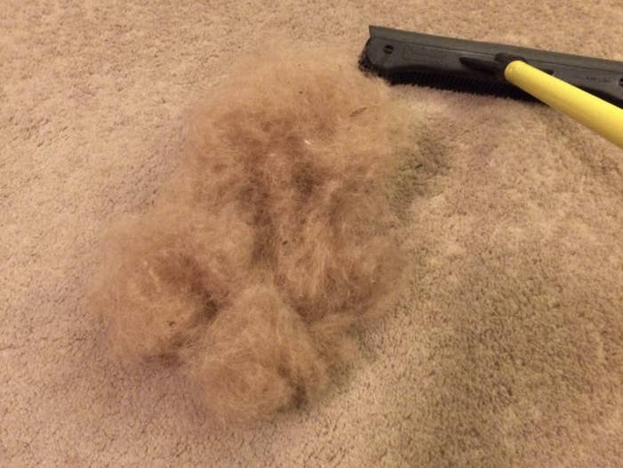 pile of fur from carpet
