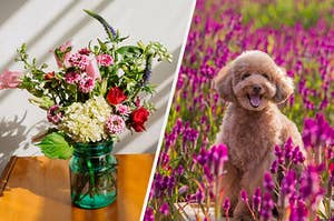 A happy dog in a field of flowers
