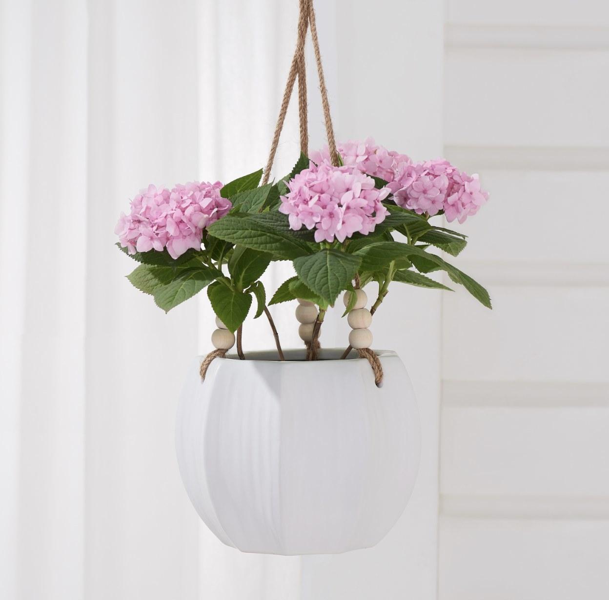 A hanging planter