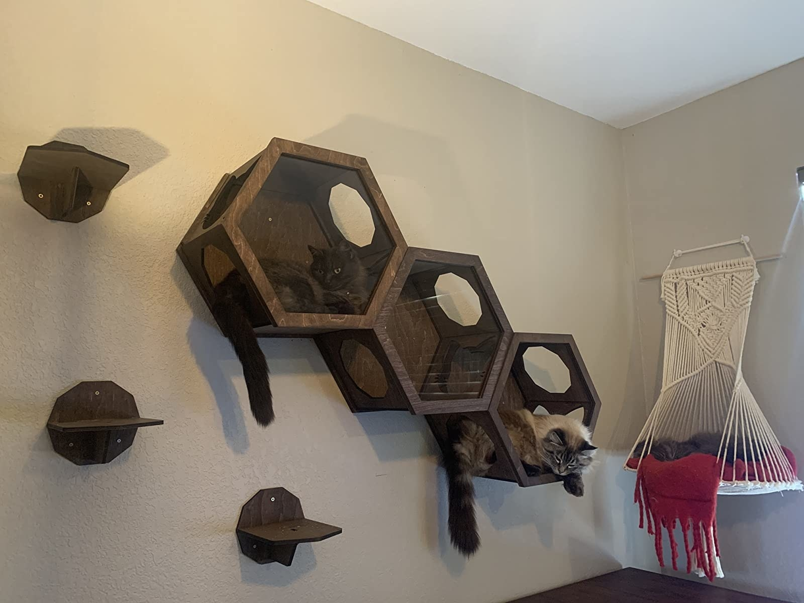 The three hexagons, which are connected and mounted on the wall, so that the cat may walk straight through them, or enter each individually