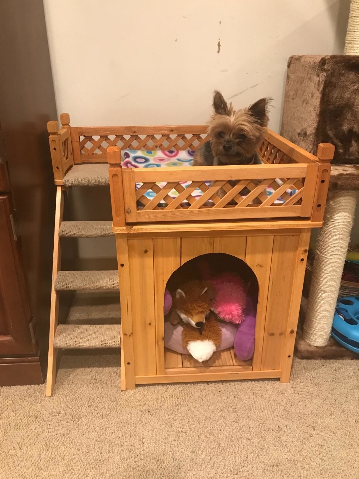 The pet bed, which is made of natural stain wood, and which has a small hutch on the bottom, a deck with railings on top, and a small staircase connecting the two