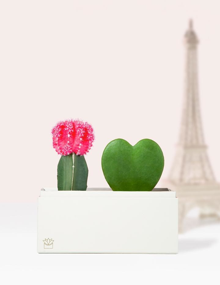 a white box with a pink cactus and a heart-shaped plant