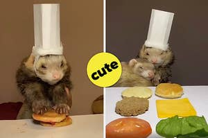 Ferret with a chef hat on making food and snuggling with its buddy