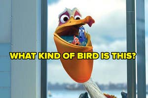 What kind of bird is this? with photo of bird from finding nemo