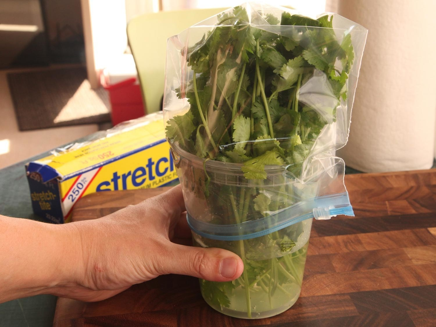 Cilantro stored upright in a jar of water and covered with a ziplock bag