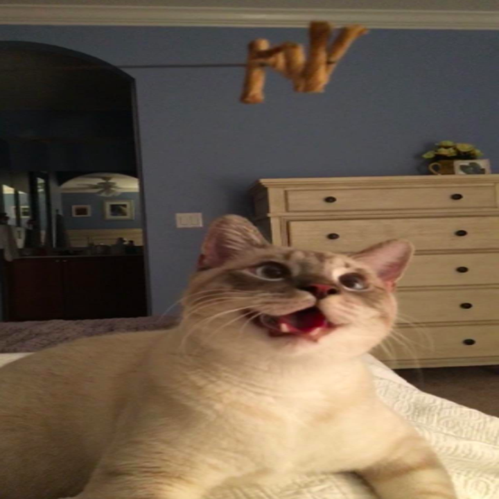 a reviewer's cat looking at the toy