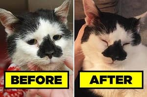 """A """"Before"""" picture of a cat looking sad, and an """"After"""" picture of it looking happy"""