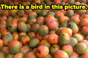 picture that reads there is a bird in this picture