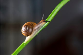 A snail heroically climbing a plant