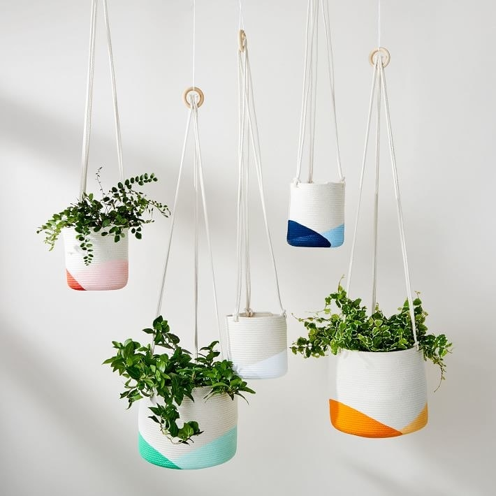 Four of the hanging planters, three filled with plants, and the others empty