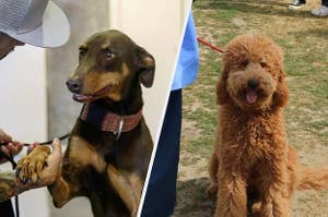 split image of dogs being attended to at correctional facility