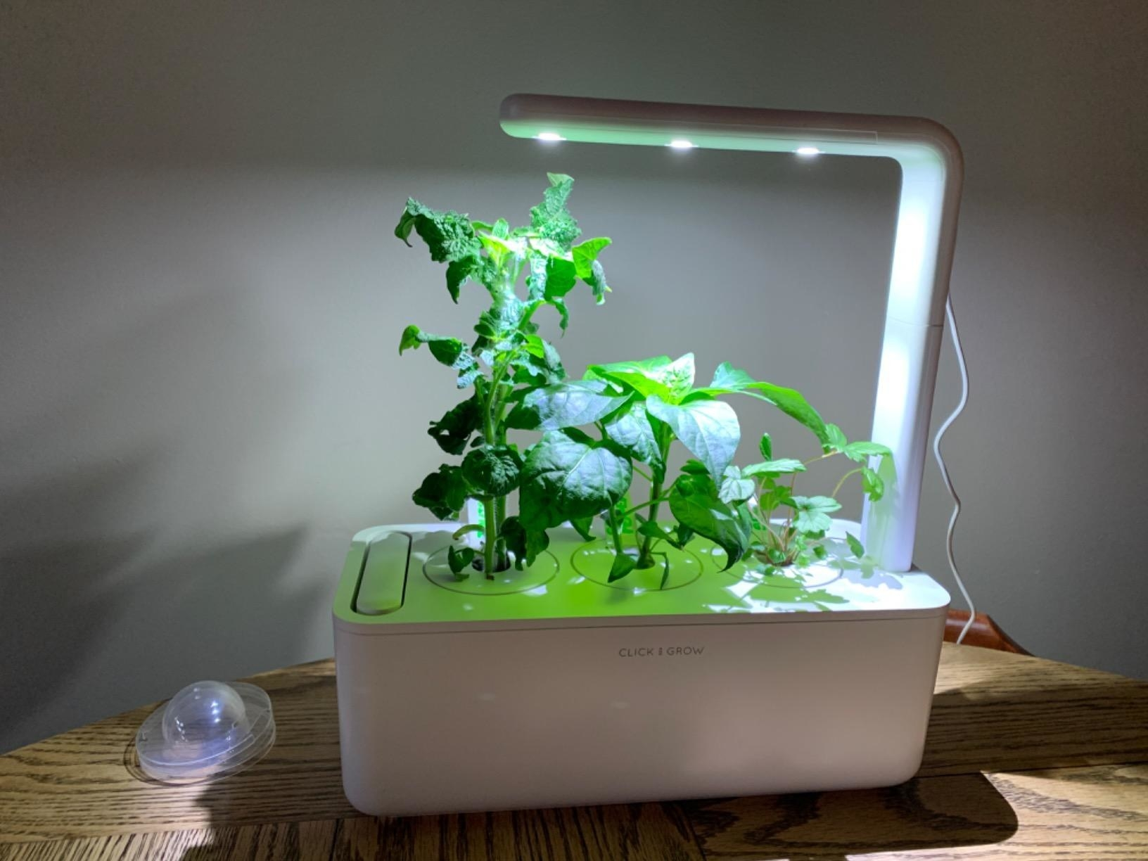 Reviewer photo of Click and Grow Smart Garden placed on table