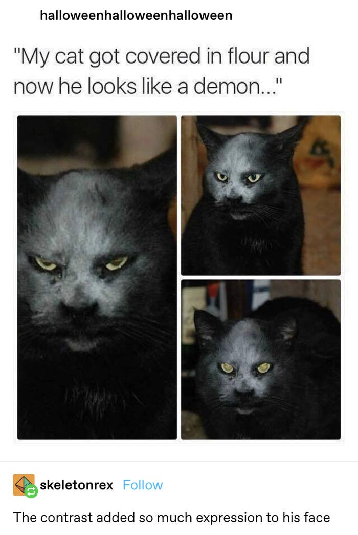 a cat with flour on its face, making it look like a demon