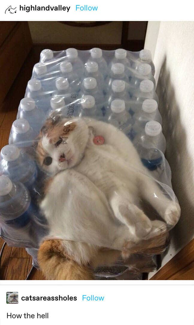 a cat stuck inside a plastic water bottle container