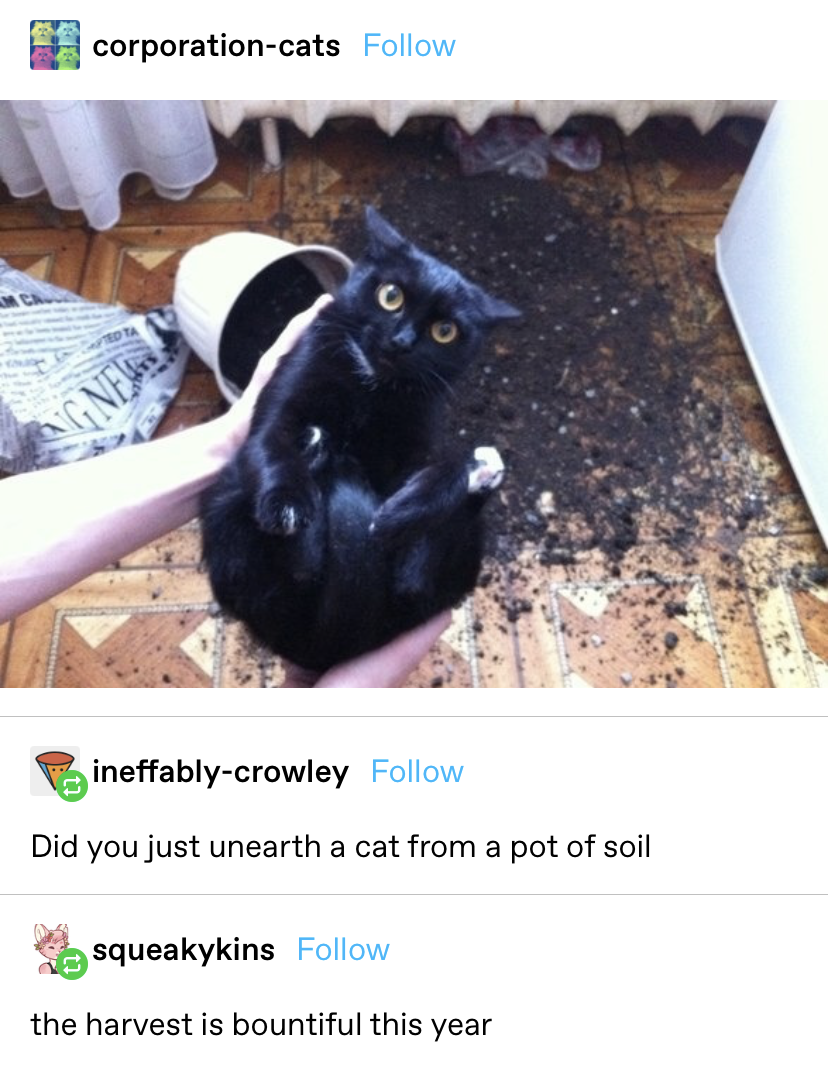 """a cat being picked up from a knocked over pot of soil with the responses """"did you just unearth a cat from a pot of soil"""" and """"the harvest is bountiful this year"""""""