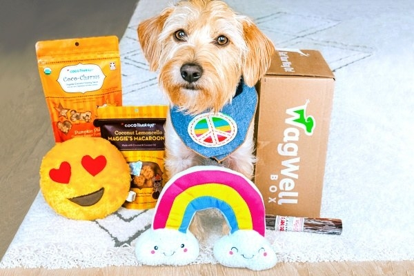 a small terrier dog with a rainbow plushie, bully stick, dog treats, smiley plushie, and Wag Well box