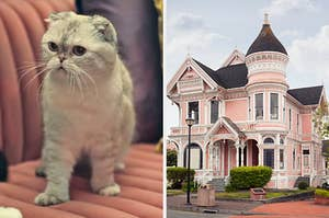 On the left, Taylor Swift's cat Olivia Benson, and on the right, a Victorian-style home on the corner of a street