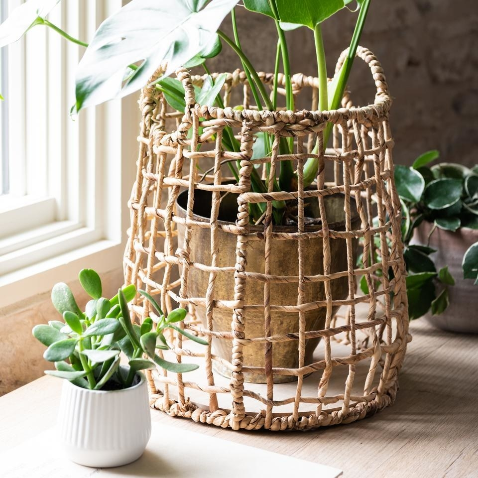 woven basket around a house plant
