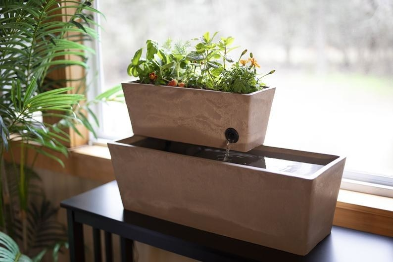 the aquaponic system with live plants growing in a container above the water basin