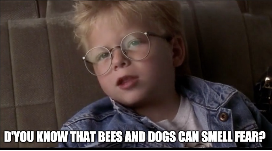 "The boy in Jerry Mcguire says ""Do you know that bees and dogs can smell fear"""