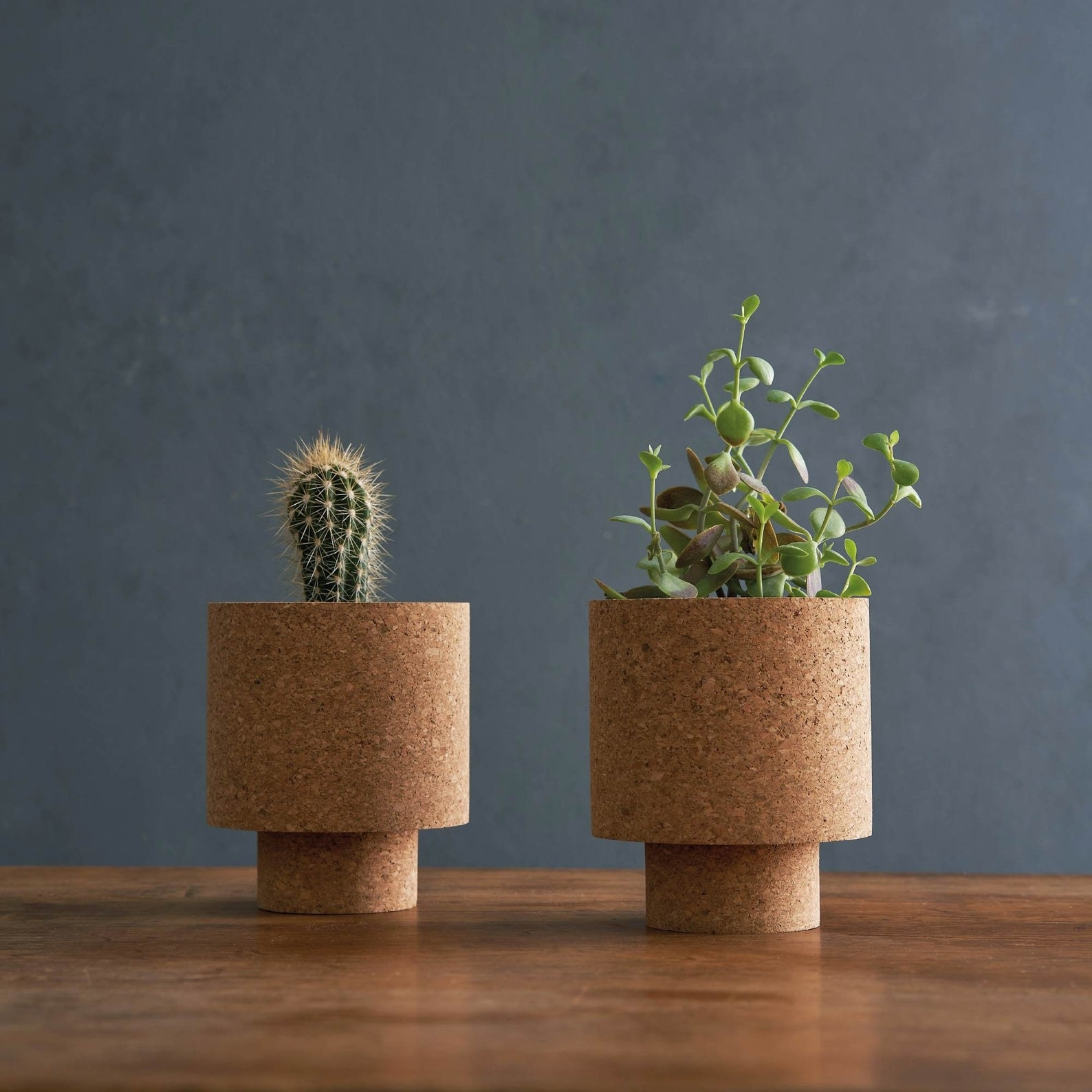 two cylinder-style cork planters with succulent plants in them
