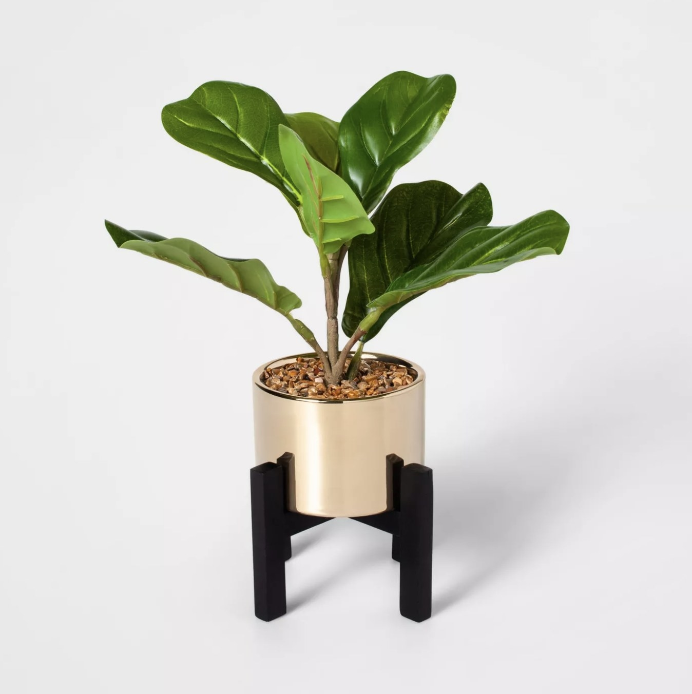 The fiddle leaf plant
