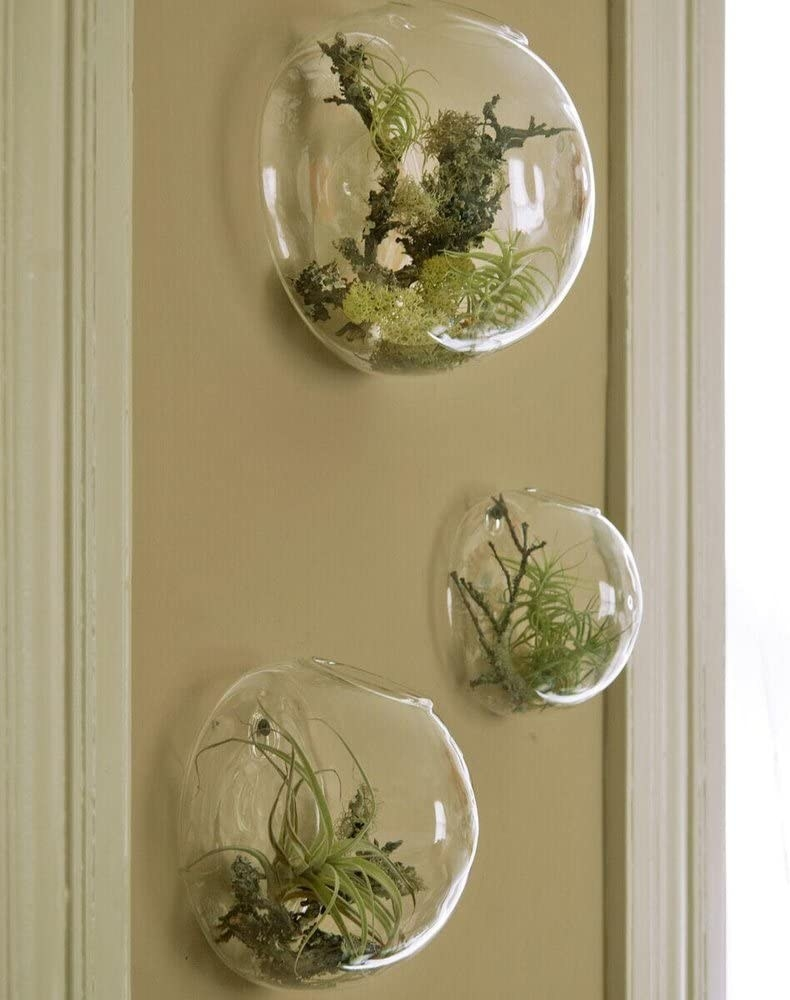 A trio of bulbous terrarium planters hung on a wall