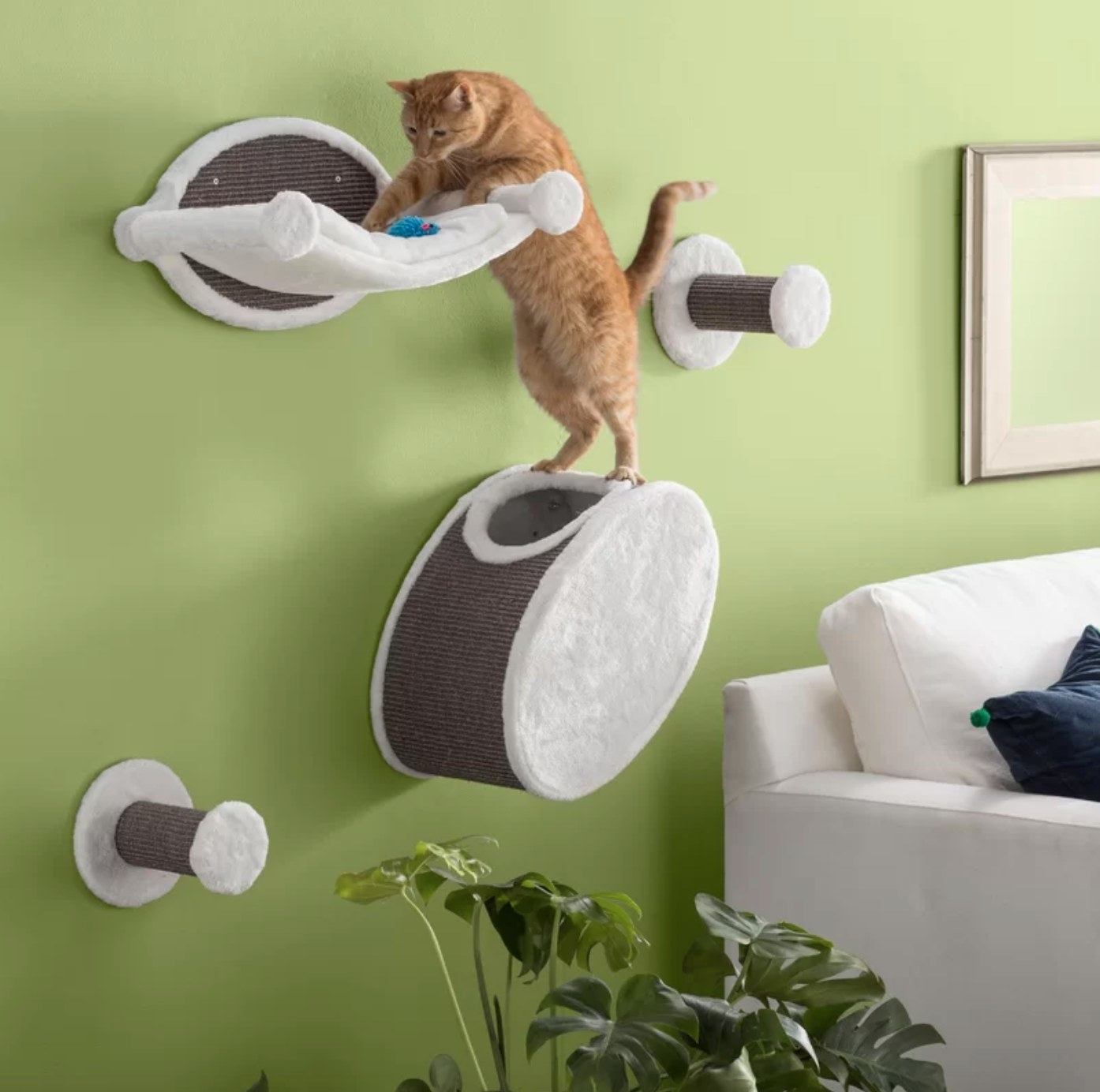 The cat perch in white and gray