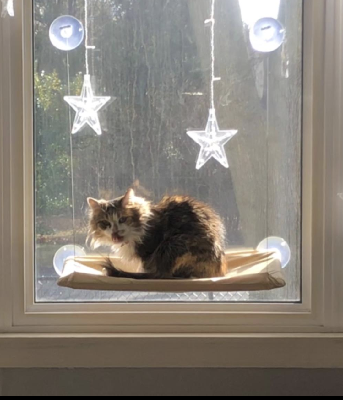 A cat resting in a hammock attached to the window with four suction cups