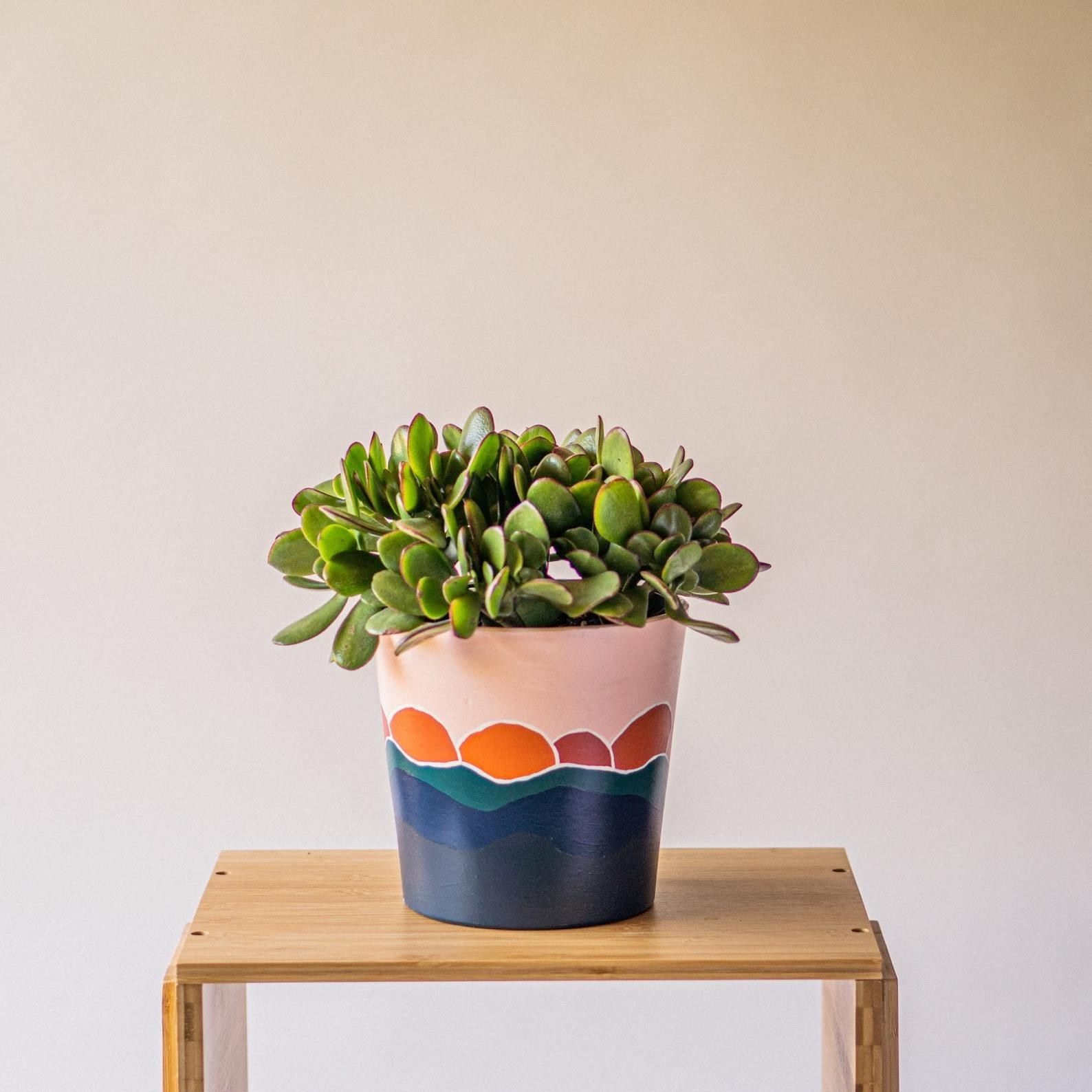 The pot with a sunset painting holding a succulent