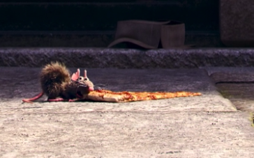 little rat nibbling huge slice of pizza