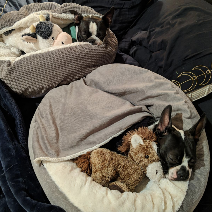 reviewer photo of French bulldog snuggled inside bed