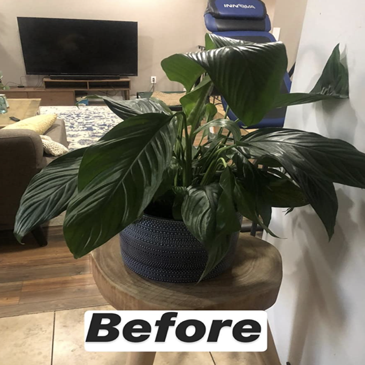 a reviewer's house plant with wilting leaves
