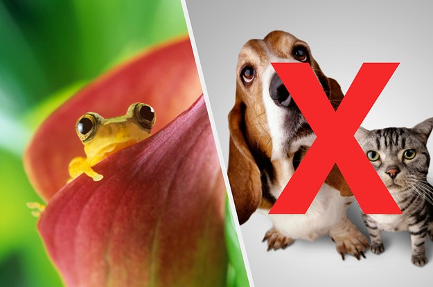 21 Frogs That Are So Much Cuter Than Cats Or Dogs