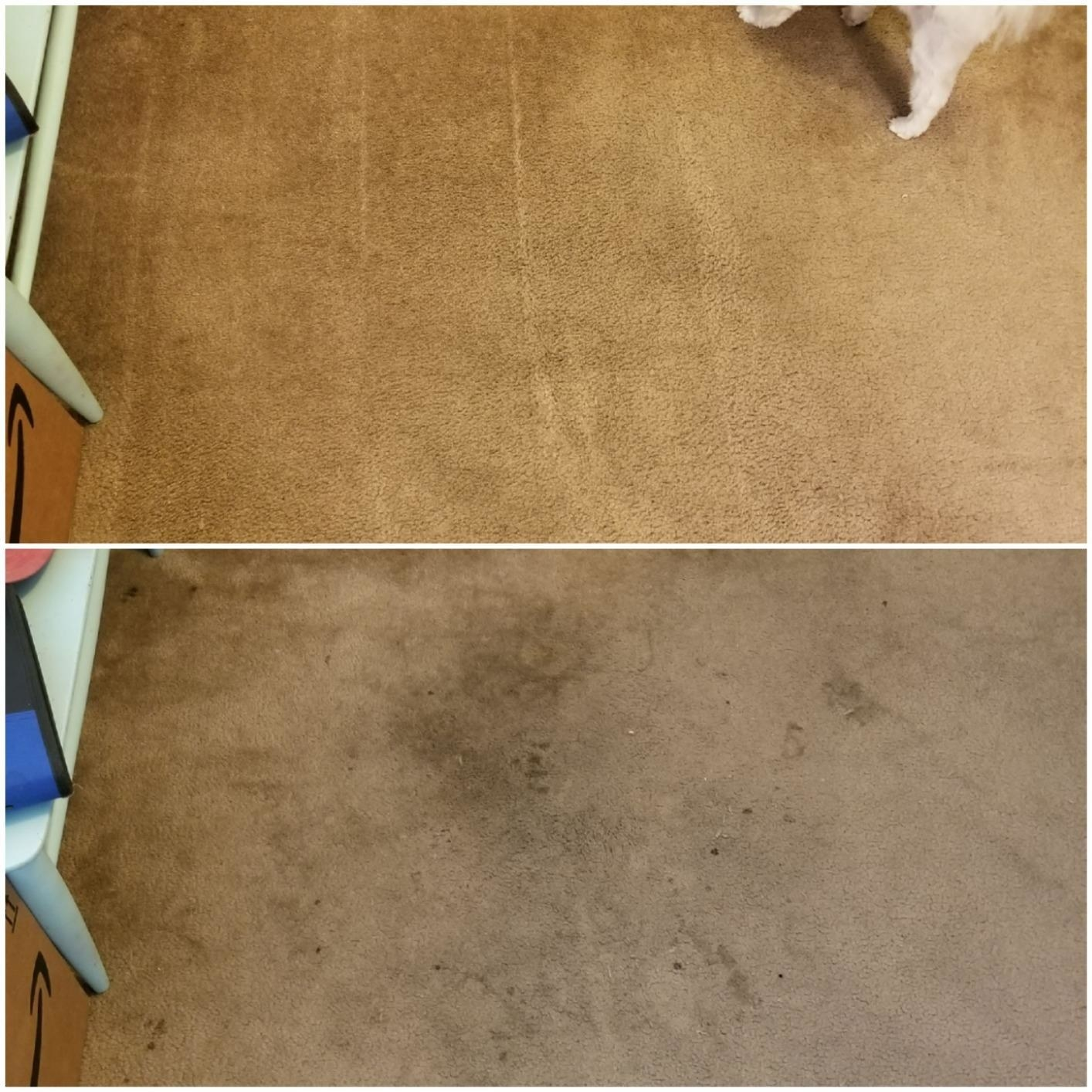 A reviewer's before and after photos which show a stained carpet and then a perfectly clean carpet