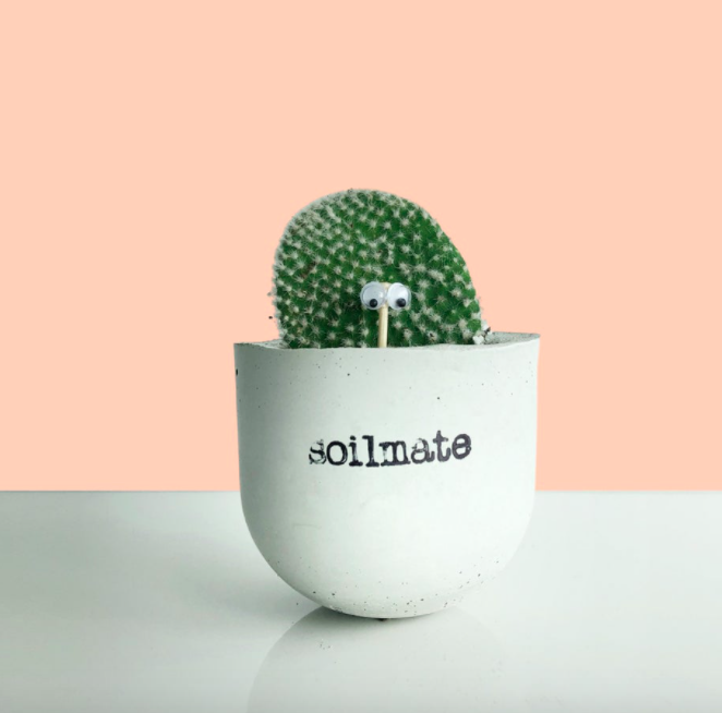 A tiny cactus inside a concrete planter that says soilmate