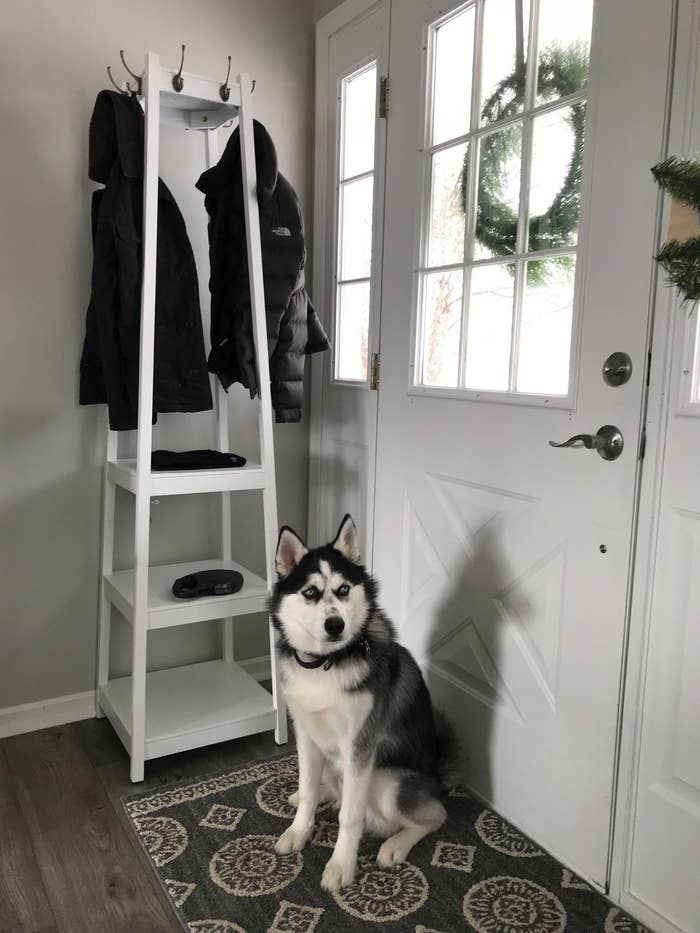 reviewer image of a customer's dog sitting in front of the white Roundhill Furniture Vassen Coat Rack in their entryway