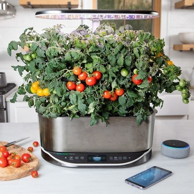an aerogarden filled with tomatoes
