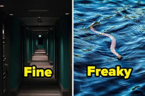 """""""Fine"""" over a hotel hallway and """"freaky"""" over a snake swimming"""