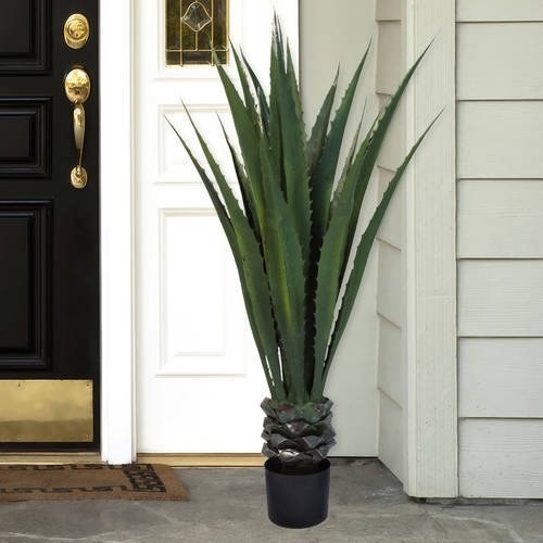 The agave plant staged on a front porch