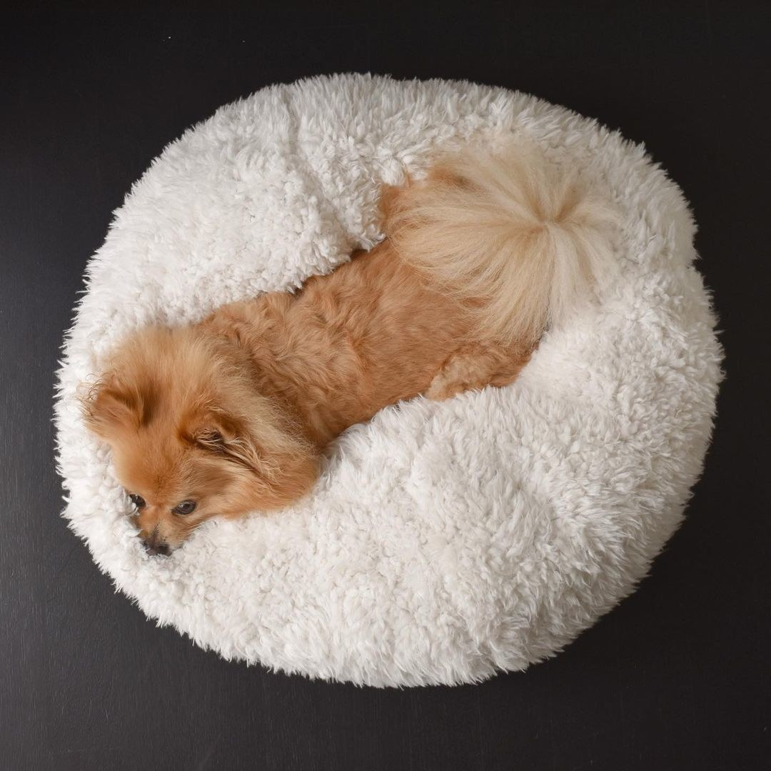 a dog in the white comfy bed