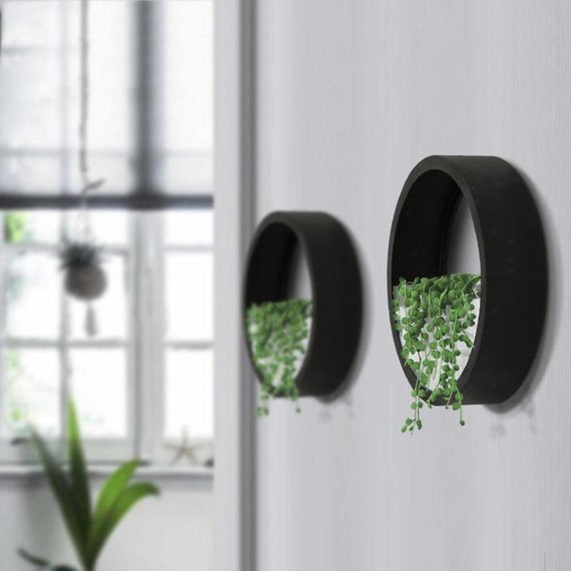 A pair of round wall planters with baby's tears plants hanging out of them