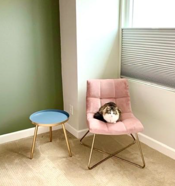 Reviewer's image of cat sitting on pink accent chair