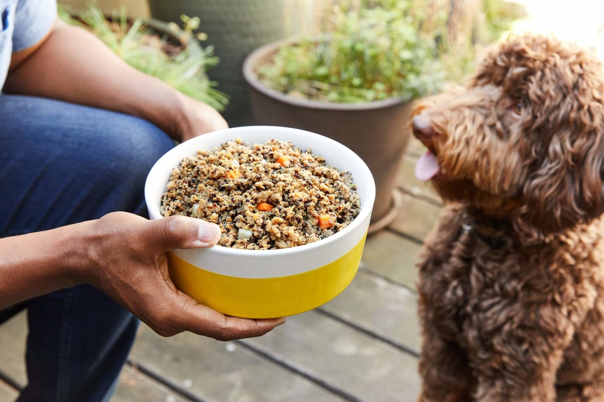 Hand holding a bowl of dog food in front of a hungry looking dog