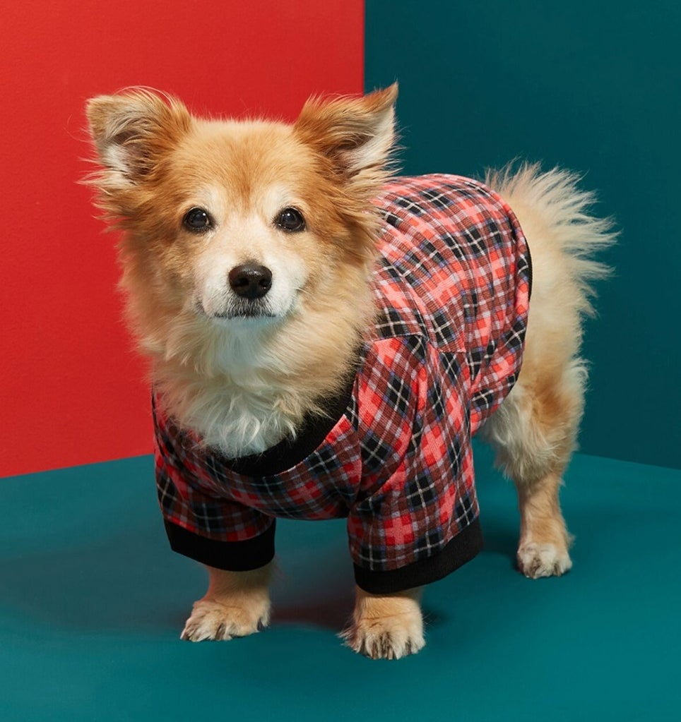 The plaid pet t-shirt in red plaid