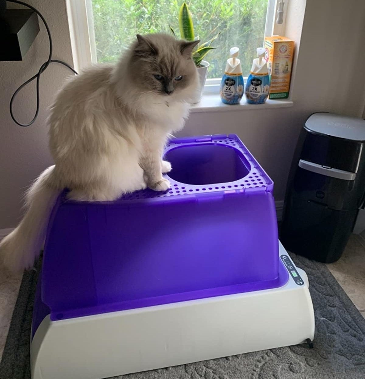 reviewer photo showing their cat sitting on top of the purple litter box