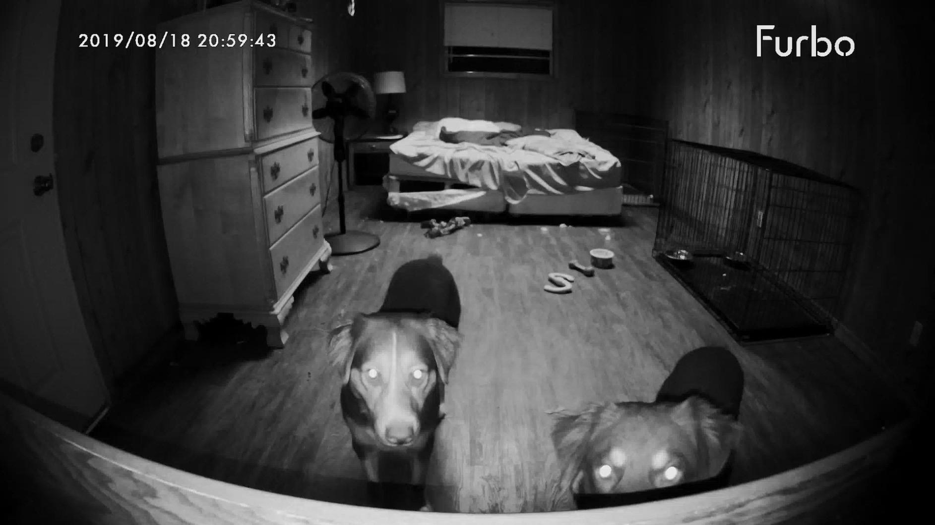 reviewer photo showing their two dogs staring into the Furbo camera at night