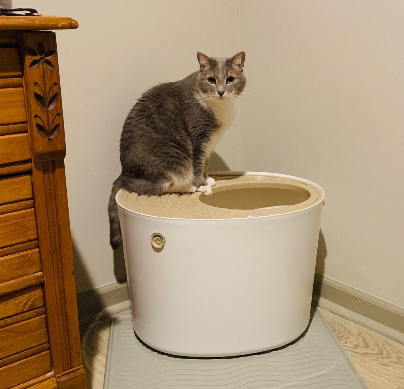 reviewer photo showing their cat on top of the litter box